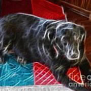 Electrostatic Dog And Blanket Art Print