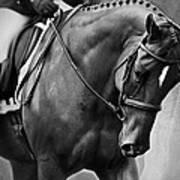 Elegance - Dressage Horse Art Print