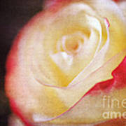 Elegant Rose Art Print