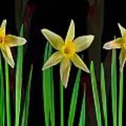 Elegant Yellow Flowers On Green Shoots Art Print