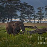 Elephant   #0134 Art Print