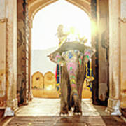 Elephant At Amber Palace Jaipur,india Art Print