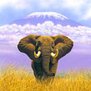 Elephant At Table Mountain Art Print