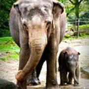 Elephant Baby Olli With Mommy Art Print