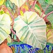 Elephant Ears Art Print