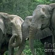 Elephant Ladies Art Print
