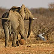Elephant On The Run Art Print