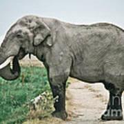 Elephant Roadblock Art Print