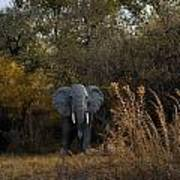 Elephant Trail Art Print