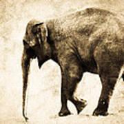 Elephant Walk Art Print