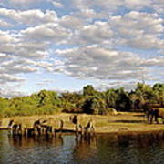 Elephants In Chobe Art Print