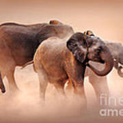 Elephants In Dust Art Print