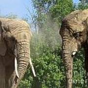Elephants In The Sand Art Print