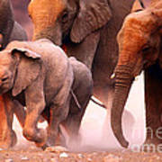 Elephants Stampede Art Print