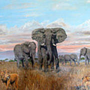 Elephants Warning To The Lions Art Print