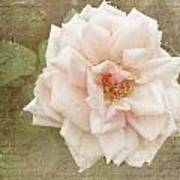 Elie Beauvillain Rose Textured Art Art Print