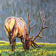 Elk Art Print by Aaron Spong