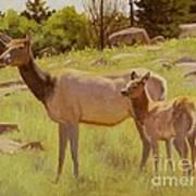 Elk And Calf Art Print