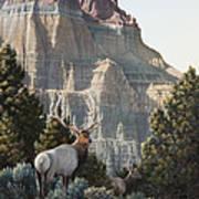 Elk At Cathedral Rock Art Print