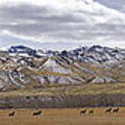 Elk At Sheep Mountain - 21x120 Art Print