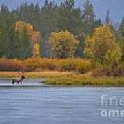 Elk Crossing Art Print