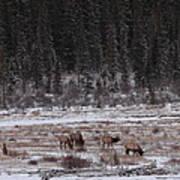 Elk Landscape Art Print
