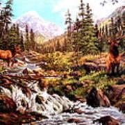 Elk Meadows Art Print by W  Scott Fenton