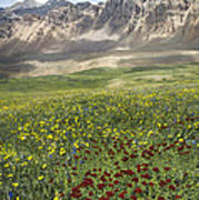 Elk Mountain Wildflowers Art Print