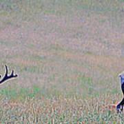 Elk On The Plains 1 Art Print