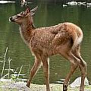 Elk Pictures 74 Art Print
