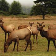 Elks Lodge Art Print