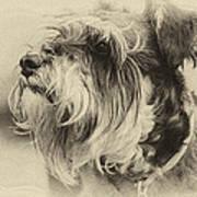 Ella Bella Boo Art Print