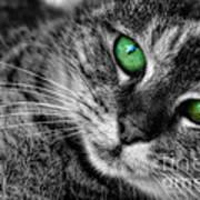 Emerald Eyes Cat  Art Print