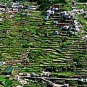 Emerald Madeira Terraces Art Print