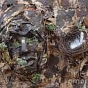 Empty Nest Always Welcome Art Print