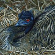 Emu Elegance Art Print