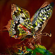 Enchanted Butterfly. First.  Art Print