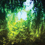 Enchanted Forest 12 Art Print