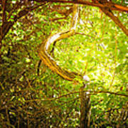Enchanted Forest 4 Art Print