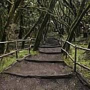 Enchanted Forest Garajonay National Park La Gomera Spain Art Print