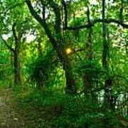 Enchanted Green Path Art Print