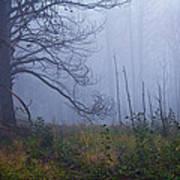 Enchanted Mist - Casper Mountain - Casper Wyoming Art Print