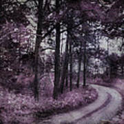 Enchanted Seney Path Art Print