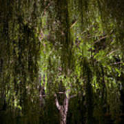 Enchanted Willow Art Print
