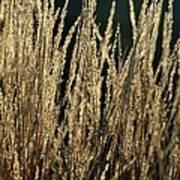 End Of Summer Grasses Art Print