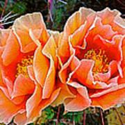 Engelmann Prickly Pear Cactus Flowers In Big Bend National Park-texas Art Print