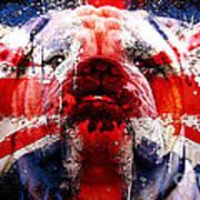 English Bull Dog Art Print