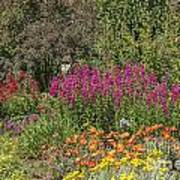 English Garden In Summertime Art Print