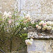 English Roses I Art Print