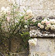English Roses II Art Print